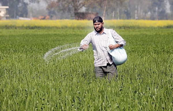 fertilizer application in wheat गेहूँ खेती की समग्र सिफारिशे wheat package practices in Hindi