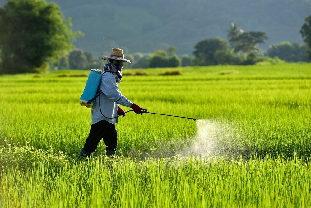 paddy pesticide ban