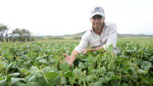 मूंग की खेती Mung bean Moong package practices