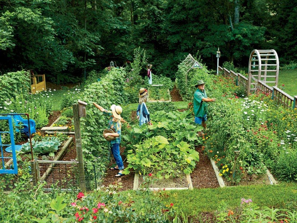 कैसे बनाये घर पर छोटा सब्जियों का बगीचा (Vegetable Garden)